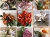 collage-fiori-jpg
